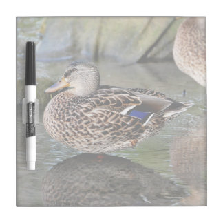 Resting Ducks Photograph Dry-Erase Whiteboard