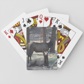 Resting Elk Playing Cards