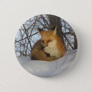 Resting Fox Button