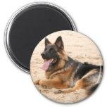 Resting German Shepherd Dog Magnet Refrigerator Magnets