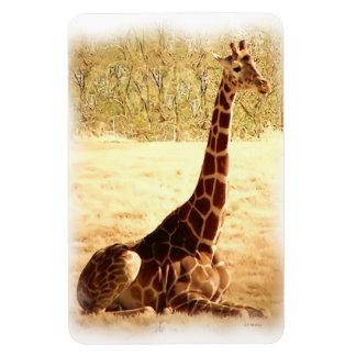 Resting Giraffe Magnet