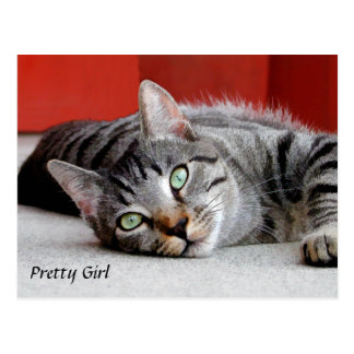 Resting Gray Tabby Cat Post Card
