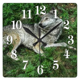 Resting Grey Wolf 2 Wildlife Clock
