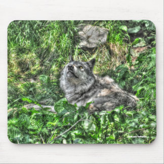 Resting Grey Wolf 3 Wildlife Gift Mouse Pad