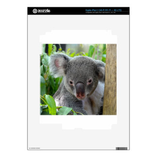 Resting, Happy Koala Decals For iPad 3