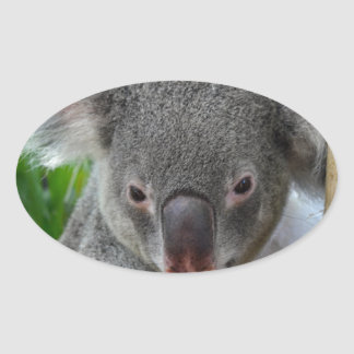 Resting, Happy Koala Oval Sticker