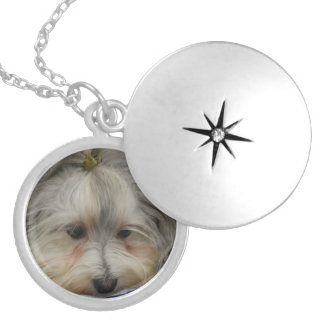Resting Havanese Dog Locket Necklace