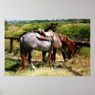 Resting horses. print