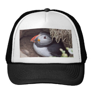 Resting in it's Burrow Puffin Hat