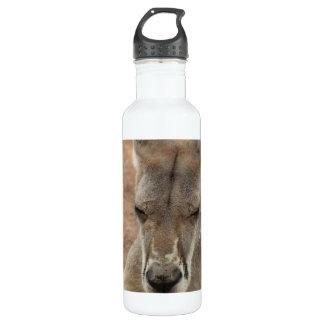 Resting Kangaroo 24oz Water Bottle