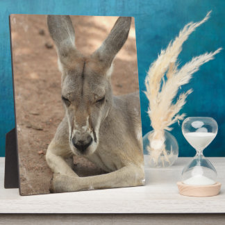 Resting Kangaroo Plaque
