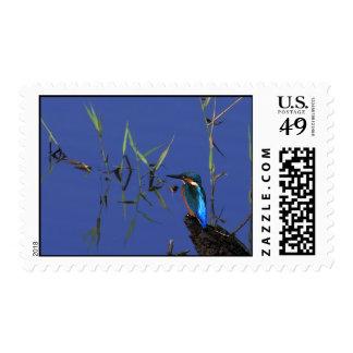 Resting Kingfisher Postage