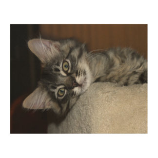 Resting Kitten Wood Canvas