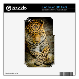 Resting Leopard iPod Touch (4th Gen) Skin Decals For iPod Touch 4G