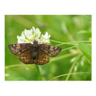 Resting Moth Postcard