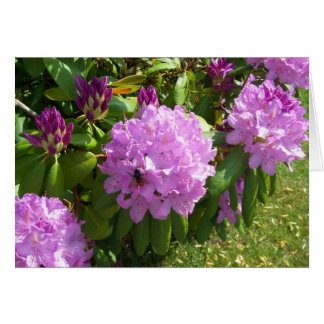 Resting on a Lavender Rhododendron Card