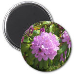 Resting on a Lavender Rhododendron Refrigerator Magnet