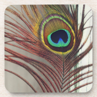 Resting Peacock Feather Beverage Coaster