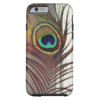Resting Peacock Feather iPhone 6 Case