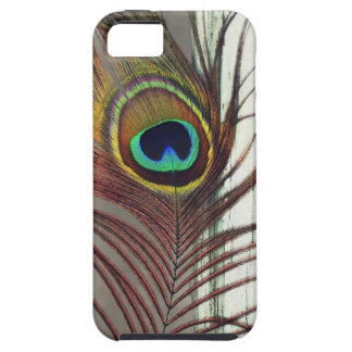 Resting Peacock Feather iPhone SE/5/5s Case