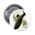 Resting Peacocks 2 Inch Round Button