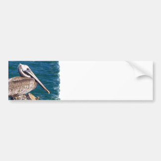 Resting Pelican Bumper Sticker