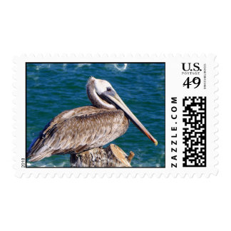Resting Pelican Postage Stamp