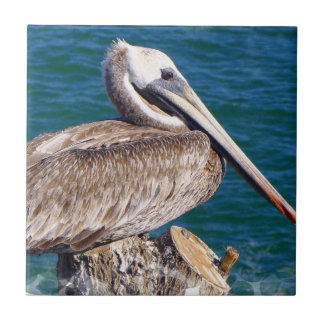 Resting Pelican Tile