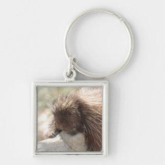 Resting Porcupine Key Chains