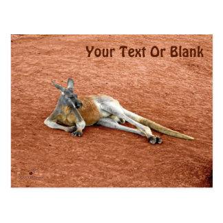 Resting Red Kangaroo Buck Postcard