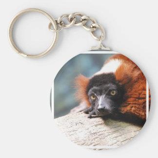 Resting Red Ruffed Lemur Basic Round Button Keychain