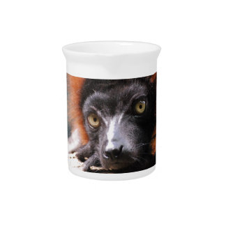 Resting Red Ruffed Lemur Beverage Pitcher