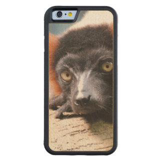 Resting Red Ruffed Lemur Carved® Maple iPhone 6 Bumper Case