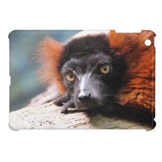 Resting Red Ruffed Lemur Cover For The iPad Mini