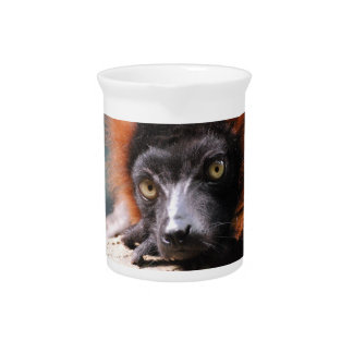 Resting Red Ruffed Lemur Drink Pitcher