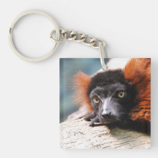 Resting Red Ruffed Lemur Single-Sided Square Acrylic Keychain