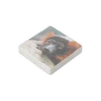 Resting Red Ruffed Lemur Stone Magnet