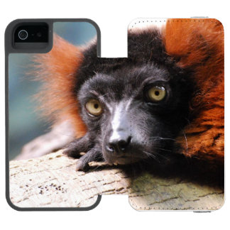 Resting Red Ruffed Lemur Wallet Case For iPhone SE/5/5s