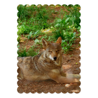 Resting Red Wolf 5x7 Paper Invitation Card
