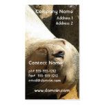 Resting Sea Lion Business Card