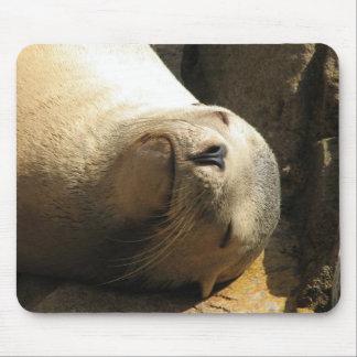Resting Sea Lion Mouse Pad
