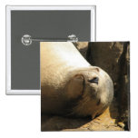 Resting Sea Lion Pin