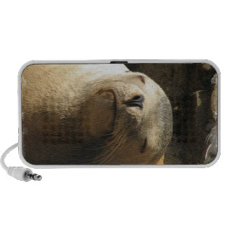 Resting Sea Lion Portable Speakers