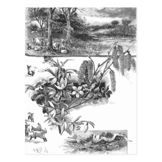 Resting Sheep, Flowers & Catkins Postcard