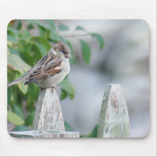 Resting sparrow mouse pad