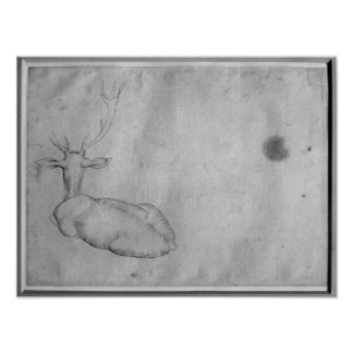 Resting stag poster