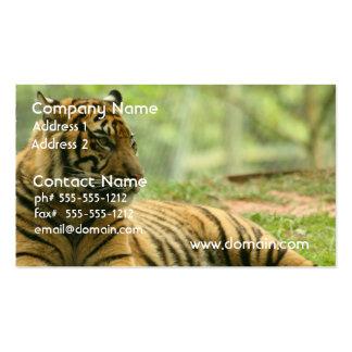 Resting Tiger Business Cards