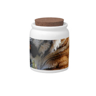 Resting Tiger Candy Jar