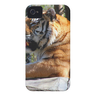 Resting Tiger iPhone 4 Covers