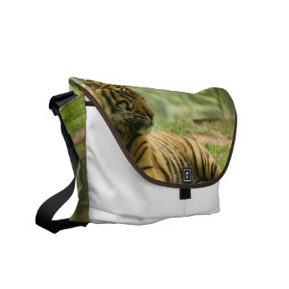 Resting Tiger Messenger Bag